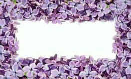Capítulo para las imágenes con las flores de la lila Modelo natural Fotos de archivo libres de regalías