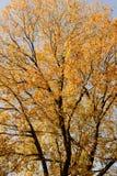 Capítulo por las hojas de arce en parque de la ciudad el día del sol Imagen de archivo libre de regalías