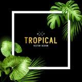 Capítulo tropical exótico del verano Fotografía de archivo libre de regalías