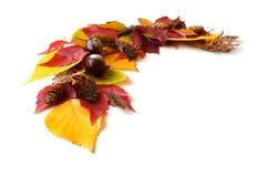Capítulo, una esquina de las hojas de otoño y frutas Imagen de archivo
