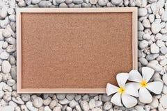 Capítulo y frangipani Imágenes de archivo libres de regalías