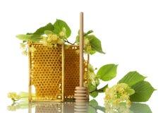 Capítulos con la miel de la abeja, el eje y las flores del tilo aisladas en blanco Fotos de archivo libres de regalías