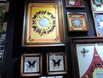 Capítulos con las mariposas dentro del jardín de la mariposa de Dubai imagen de archivo