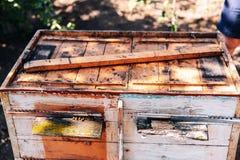 Capítulos de una colmena de la abeja Apicultor que cosecha la miel El fumador de la abeja Foto de archivo