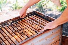 Capítulos de una colmena de la abeja Apicultor que cosecha la miel El fumador de la abeja Imagenes de archivo