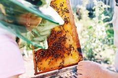 Capítulos de una colmena de la abeja Apicultor que cosecha la miel El fumador de la abeja Foto de archivo libre de regalías