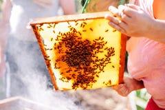 Capítulos de una colmena de la abeja Apicultor que cosecha la miel El fumador de la abeja Fotografía de archivo