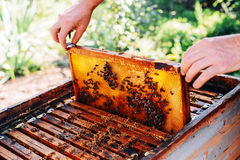 Capítulos de una colmena de la abeja Apicultor que cosecha la miel El fumador de la abeja Imágenes de archivo libres de regalías