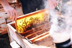 Capítulos de una colmena de la abeja Apicultor que cosecha la miel El fumador de la abeja Fotos de archivo