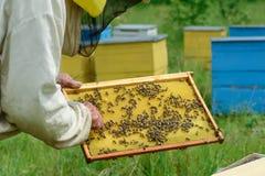 Capítulos de una colmena de la abeja Apicultor que cosecha la miel Apicultor Inspecting Bee Hive Fotografía de archivo libre de regalías