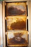 Capítulos de una colmena de la abeja Apicultor que cosecha la miel Utilizan al fumador de la abeja para calmar abejas antes de ma Fotografía de archivo libre de regalías