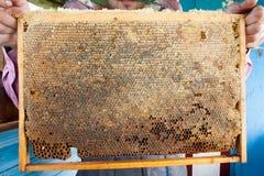 Capítulos de una colmena de la abeja Apicultor que cosecha la miel Utilizan al fumador de la abeja para calmar abejas antes de ma Foto de archivo