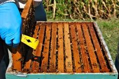 Capítulos en una colonia de la abeja foto de archivo