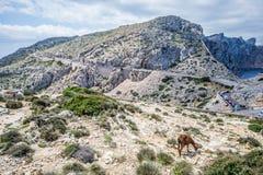 Cap De Formentor Stockfoto