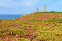 Cap Fréhel moorland in summer. Beautiful landscape view of the cliffs at Cap Fréhel in Brittany, France, with its lighthouses and moorland with vibrant heather Stock Photos