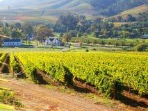 Cap S. Afrique de banhoek de vigne Images libres de droits