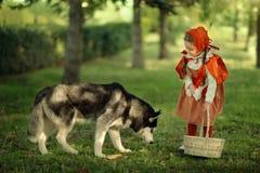 Capa con capucha roja y lobo gris en el bosque Fotografía de archivo libre de regalías
