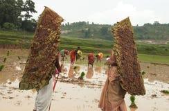capa de chuva tradicional Imagem de Stock Royalty Free
