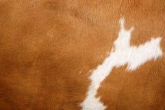 Capa de la vaca de Brown Fotos de archivo