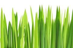 Capa de las hierbas verdes Foto de archivo