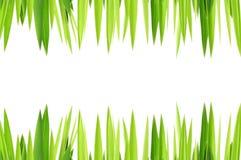Capa de las hierbas verdes Foto de archivo libre de regalías