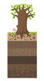 Capa de suelo debajo del árbol ilustración del vector