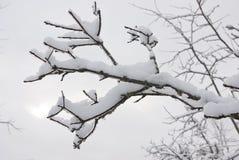 Capa fina del hielo y de la nieve. Imagen de archivo