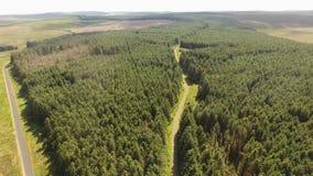 Capanagh Moss Bog Forest trän i Irland arkivfilmer