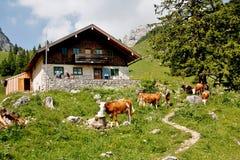 Capanna alpina nelle montagne fotografia stock libera da diritti