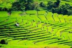 Capanna bianca dell'agricoltore che resta sui terrazzi del riso Immagine Stock Libera da Diritti