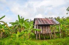 Capanna cambogiana di Traitional in mezzo al bananeto, 'chi' sexy, Cambogia Immagine Stock Libera da Diritti