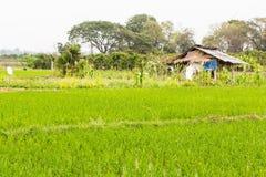 Capanna con il giacimento del riso in Tailandia Immagini Stock