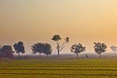 Capanna del coltivatore in nebbia di mattina Fotografia Stock