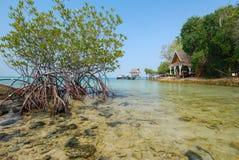 Capanna del mare e della mangrovia accanto alla riva di mare immagini stock libere da diritti