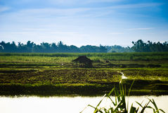 Capanna del Nipa al campo lungo il fiume Fotografia Stock