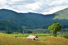 Capanna dell'agricoltore in paese della Tailandia Immagini Stock