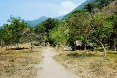 Capanna delle piante crescenti d'agricoltura tribali di kogi di una coca della famiglia nel loro giardino immagine stock
