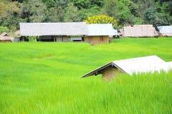 Capanna e case nella risaia fotografia stock libera da diritti