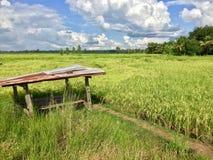 capanna nel giacimento del riso Fotografia Stock Libera da Diritti