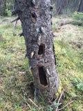 Capanna sugli'alberi Immagini Stock Libere da Diritti