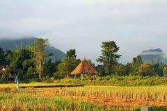 Capanna tradizionale del ` s dell'agricoltore nel giacimento del riso Fotografia Stock