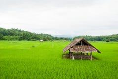 Capanna in un giacimento del riso Fotografia Stock Libera da Diritti