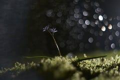 Capannone di notte Fotografia Stock