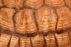 Caparazón de la tortuga fotografía de archivo libre de regalías