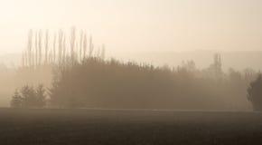 Capas de árboles en la niebla Imagen de archivo libre de regalías