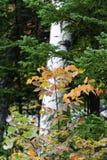 Capas de follaje en bosque Foto de archivo