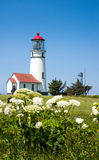 Cape Blanco Lighthouse with flowers. Blooming wildflowers positioned in front of the Cape Blanco lighthouse in Oregon royalty free stock photography