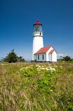 Cape Blanco Lighthouse with native flowers Royalty Free Stock Photos