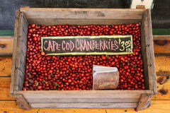 Cape Cod Cranberries Stock Photo
