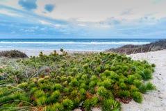 Cape Cod em novembro Imagens de Stock
